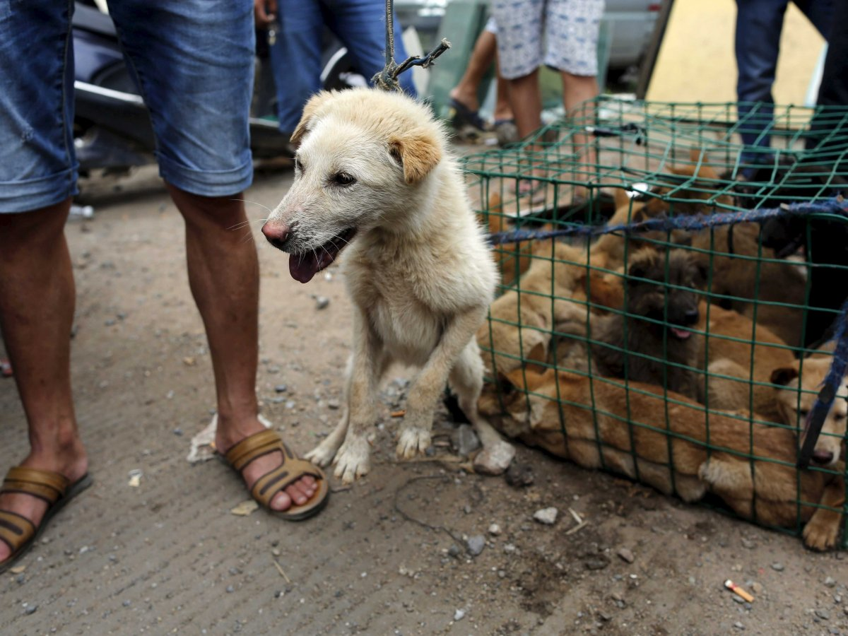 Китайцы едят собак видео - wwwfassennet-видео сёрфинг